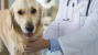 What is a Biopsy and When Might Your Dog Need it?