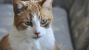 What to Expect from Your Senior Cat's Checkup