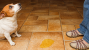 Why Is My Dog Suddenly Peeing on the Floor?