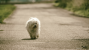 Summertime Trauma: The Hit-By-Car (HBC) Dog