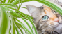Why Do Cats Eat Plants, and Should I Be Worried?