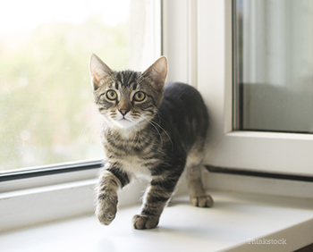 Kitten by the window