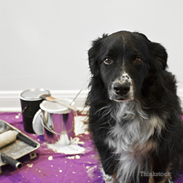 Dog with paint cans behind him