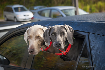 Two dogs in a parked car