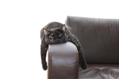 Cat upset on the couch