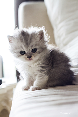 Kitten sitting on a bed