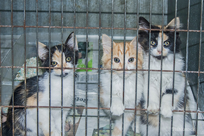 Kittens in a shelter